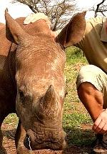 "Crimson Medici Special Recording of #1 Song ""Survivor"" Offers lifeline to African Rhinos"